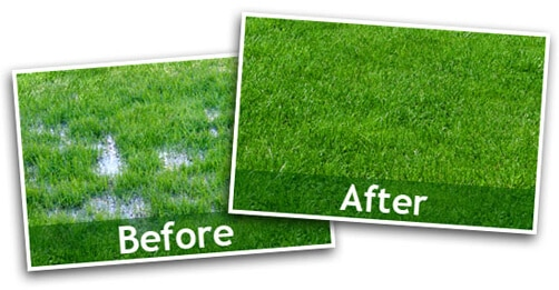before-and-after-drain-field